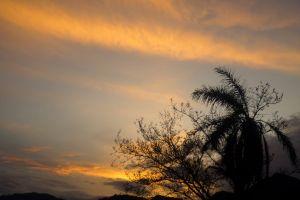 sky tree nature sunset