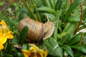 snail crawling nature helix escargot summer food beautiful natural brown