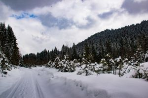 snow germany ettal trees snow flakes weather snow capped mountain snow capped bayern snow peaks