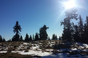 snow sunny day forest