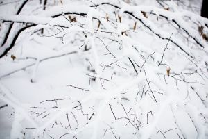 snow winter tree icy branches tree branch branch white closeup cold