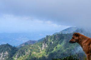 srilanka wild dog mountain