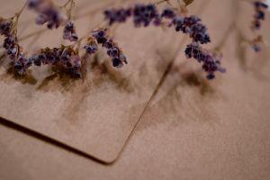 still life indoors flower daylight color beautiful lavender color flora wood wear