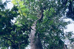 still-life landscape tropical environment beautiful green park grow plants season