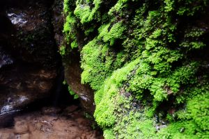 stone growth color daylight green water bright landscape rock moss