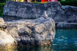 stone rock beach pigeons water