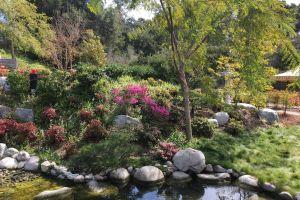 stream nature park beautiful flowers japanese japanese culture japanese garden garden pond garden