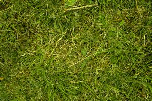 structure background close grasses juicy nature natural material meadow macro texture