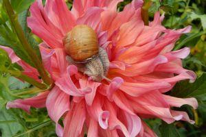 summer edible color beauty closeup healthy nature food beautiful garden