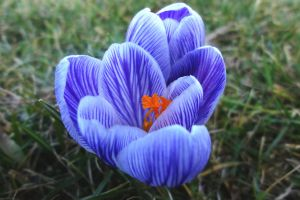 summer flower blue nature