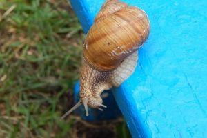 summer green natural crawling snail background escargot brown garden healthy