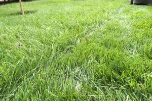 summer perfect lawn