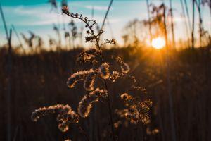 summer sunset landscape light still-life nature field dawn growth plant