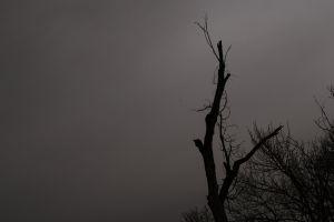 sun tree dark