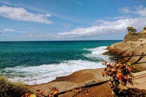 sunny beach coast flora