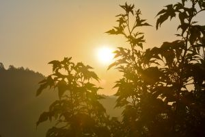 sunrise ohiya early morning sun