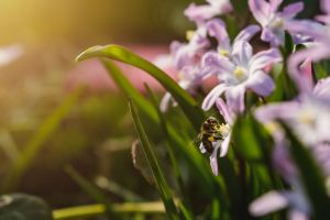 sunset light macro flowers flora beauty spring flowers nature bee insect