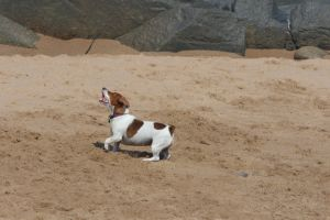 swim play friends holiday pet ocean dog animals beach nature