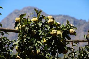 taste trees flowers farm garden explore green fruit eat south africa