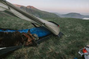 tent mammal daylight landscape scenic mountains dog background environment grass