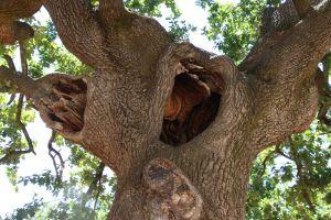 tree green tree trunk nature farm