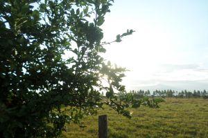tree nature contrast sun