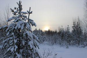 tree sun winter