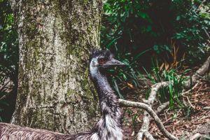 tree wild animal wild portrait environment trunk tropical zoo long wood