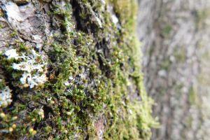 tree woods nature moss lichen forest bark
