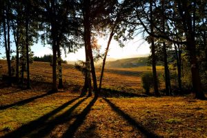 trees farmland landscape scenery
