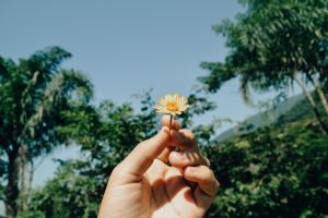 trees nature little close-up environment flora flower daylight person blooming