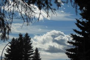 trees various clous formation sky beauty