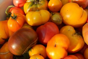vegetables garden zucchini food background fresh harvest fruits healthy tomato