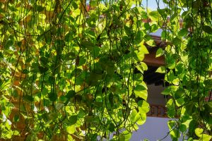 vines daylight green city