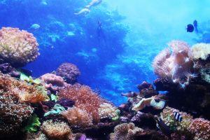 water coral sea fish tank animals fins sea animal fish ocean holiday