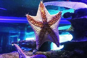 water ocean sea animals tail fish fins starfish sea animal aquarium