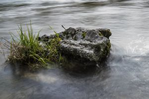 waters long exposure nature flow grasses idyllic movement fluent water stone