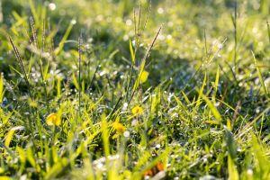 white macro petal grass flora background green fresh beautiful colorful