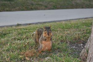wild animal squirrel eat cute