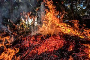 wildfire ash glowing ignite heat warmly burn trees danger wood