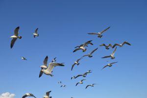 wildlife plumage seabird animals seagulls