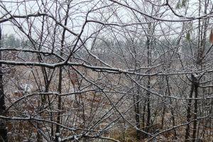 winter foliage frozen landscape aerial background plant flora texture nature