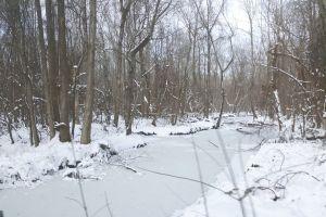 winter trees frozen river forest winter landscape