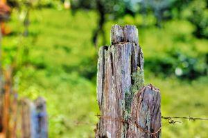 wood fence green farm ranch