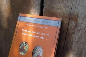 wooden title daylight story