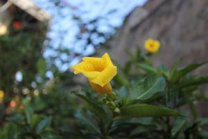 yellow blurred background flower