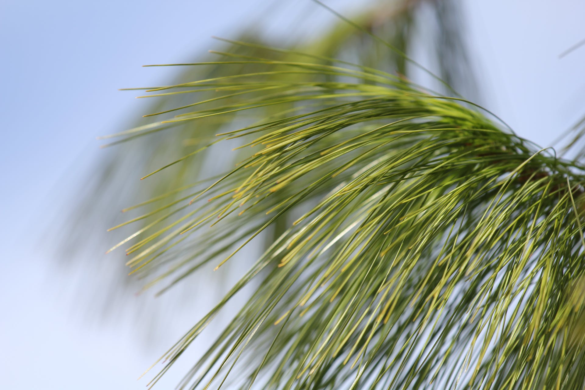 tree plant green macro