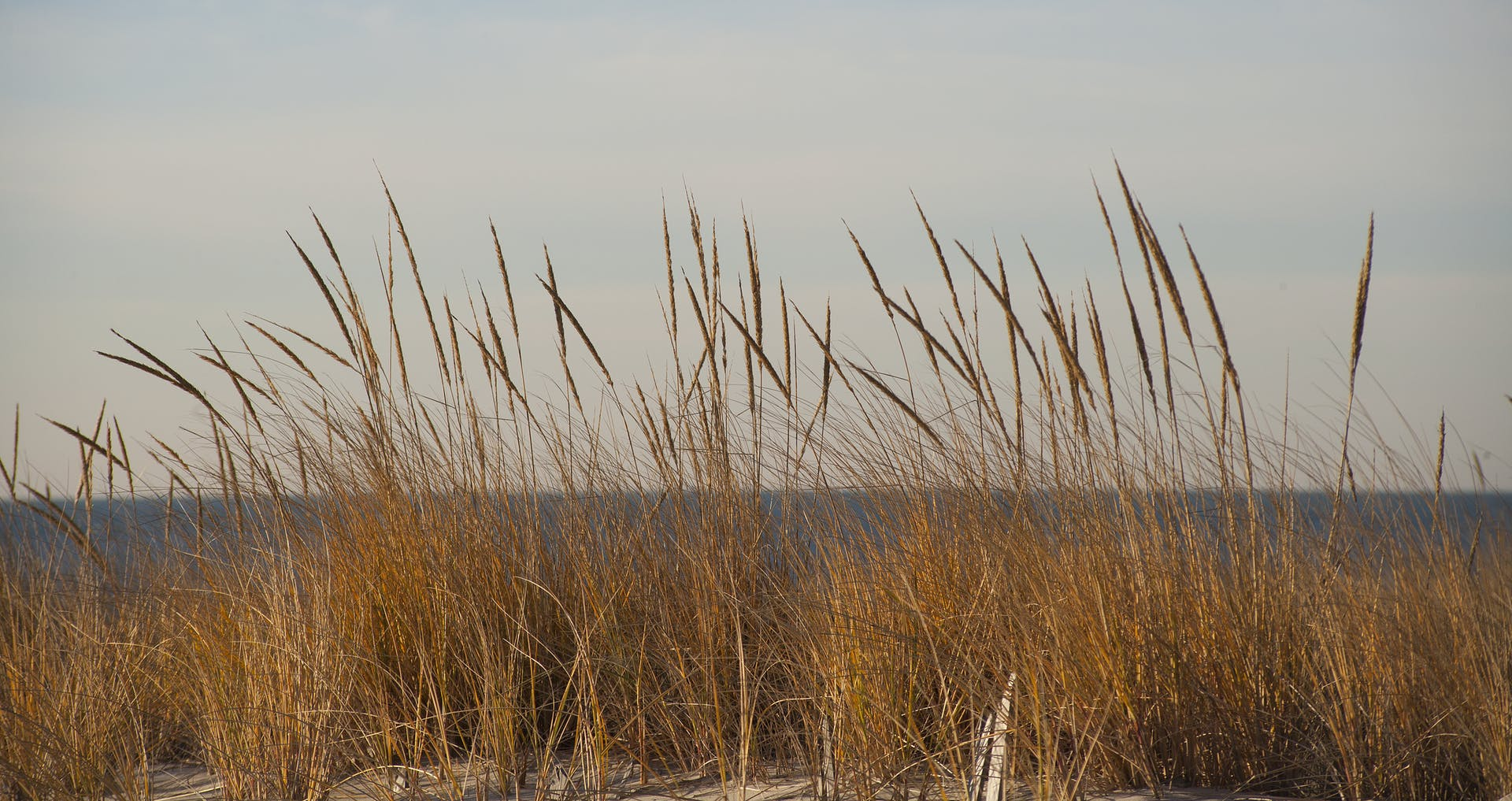 beach grass ocean atlantic ocean outdoorchallenge beach