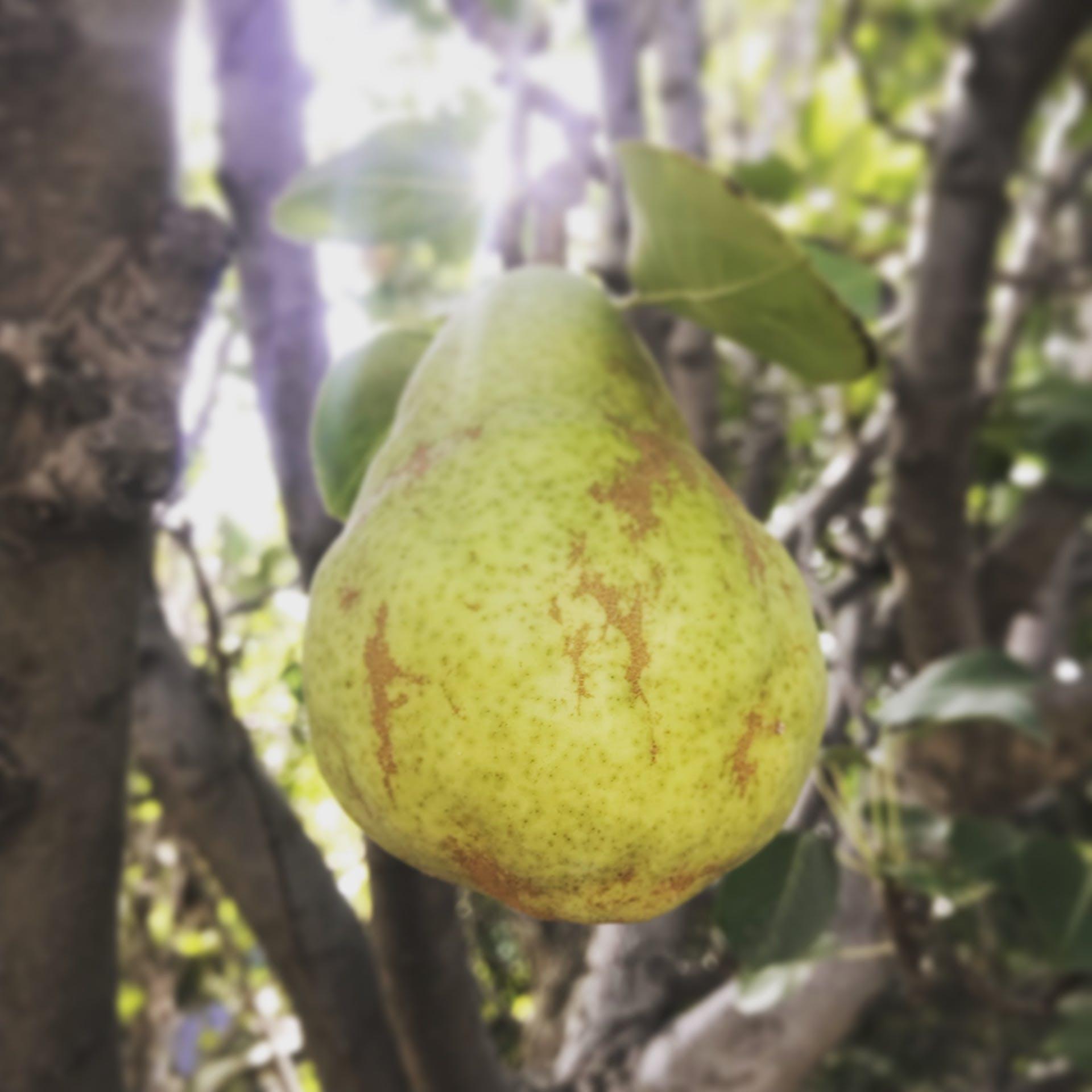 fruit fruit basket pear fruit tree fresh fruit