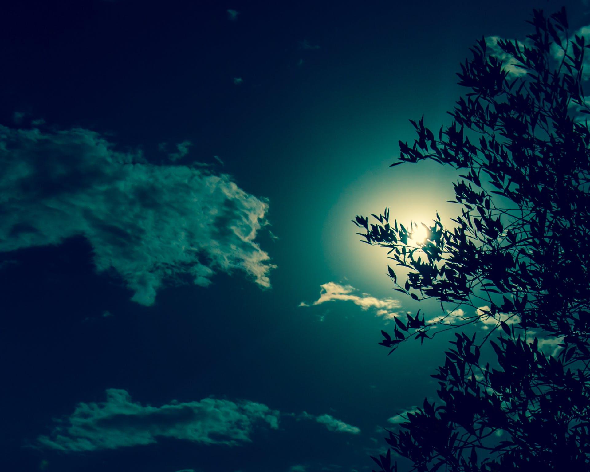 sky nature tree sun
